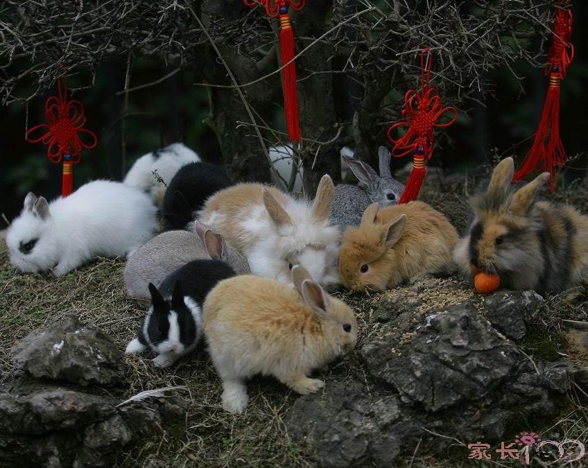 真实有趣的动物图片展_九峰动物园_家长100教育论坛