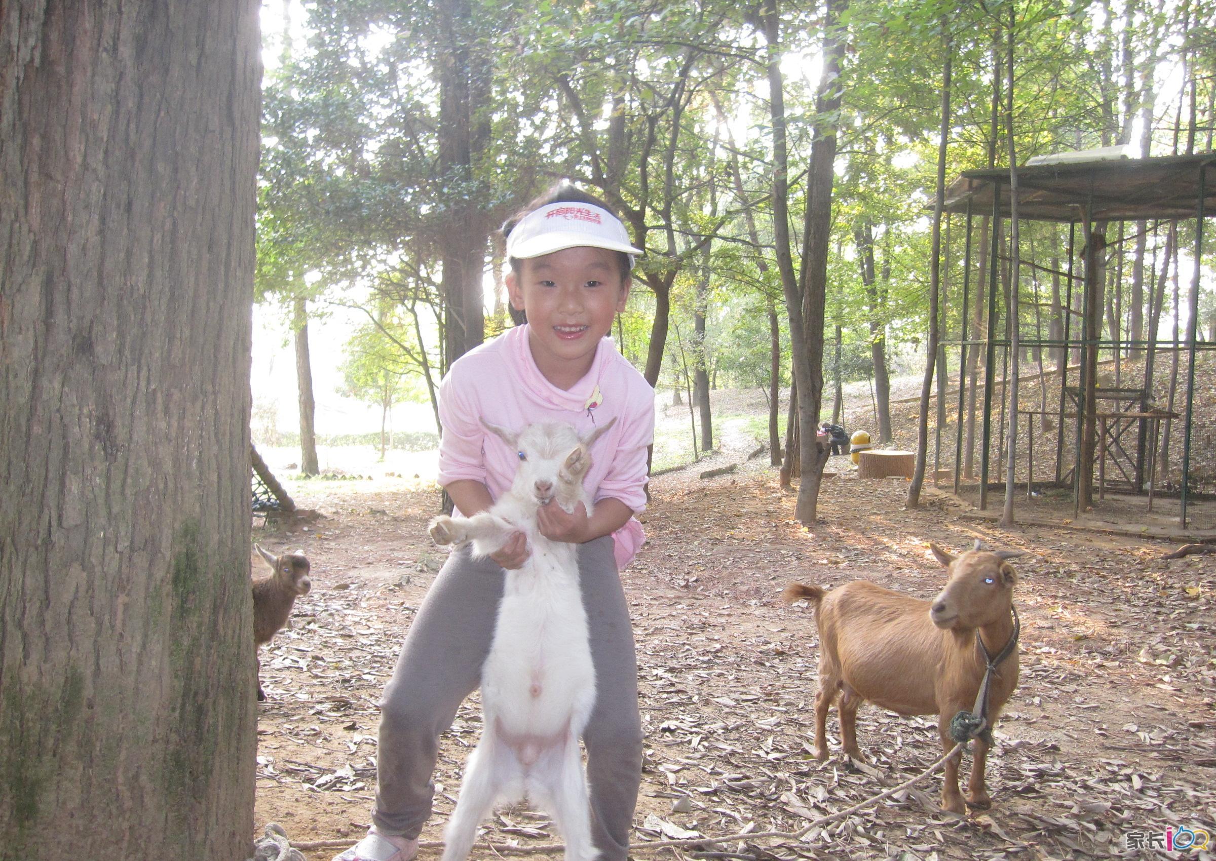 十年前蔡甸那个野生动物园开园的时候