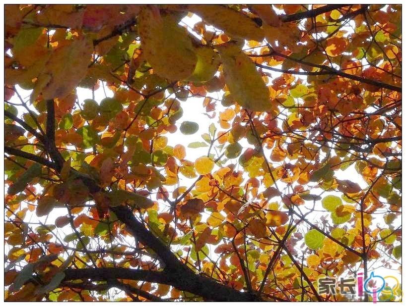 秋蝉止住了鸣唱,龟栖在浓密的树叶下,等待这个雨天的离开.