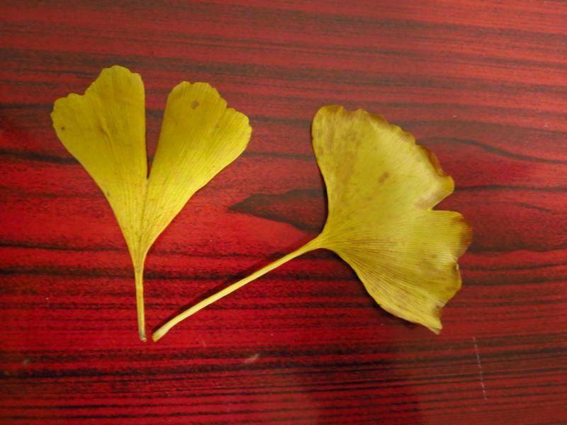 画面顶部的树枝造型和树叶的