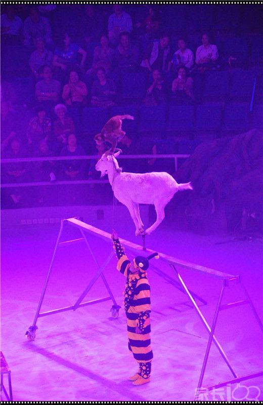 最后这个大飞人的重磅一跳落空了,全场观众为表演的小伙子加油!小伙子沉着冷静、顶住压力重新来过,连续捕捉了他从起跳、空中翻腾、拉住对面接应人的手、可惜最后还是滑落的全过程。。。正式演出时,相信会有更完美的呈现!