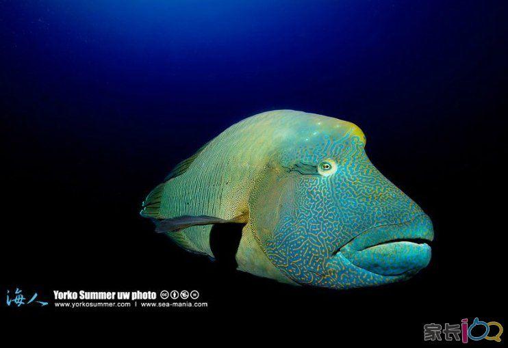 海底世界 鹦鹉鱼.jpg