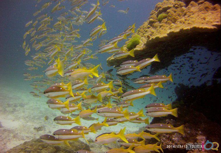 壁纸 海底 海底世界 海洋馆 水族馆 桌面 775_538