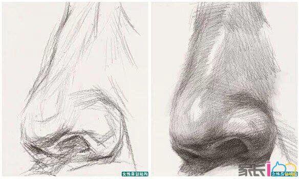 素描头像训练中五官鼻子画法详解