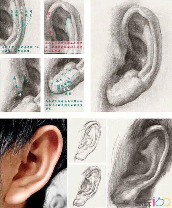 首先,虽然每个人耳朵的外形特征各不相同, 但结构却基本一致。并且,当头部平视时耳朵是斜着的,总体倾斜度与鼻梁近似。其次,因为耳朵大部分是由具有弹性的软骨组织构成的,外部形态呈现方中有圆、圆中带方的感觉,所以耳朵的外轮廓一定要画出体积感。如下图,通过对形体交界线、反光、灰面和亮面的刻画,就能较好地塑造出体积感。因为耳朵上方的三角窝多数情况下都会含在暗部中,所以对耳轮上的受光面、灰面、交界线以及反光和投影等都是我们刻画的重点。相比耳轮、对耳轮和耳垂,耳屏、三角窝和耳道在空间上比较靠里,为了拉开它们之间的前