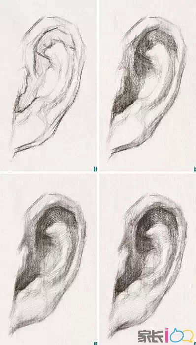 素描头像训练中五官耳朵画法详解