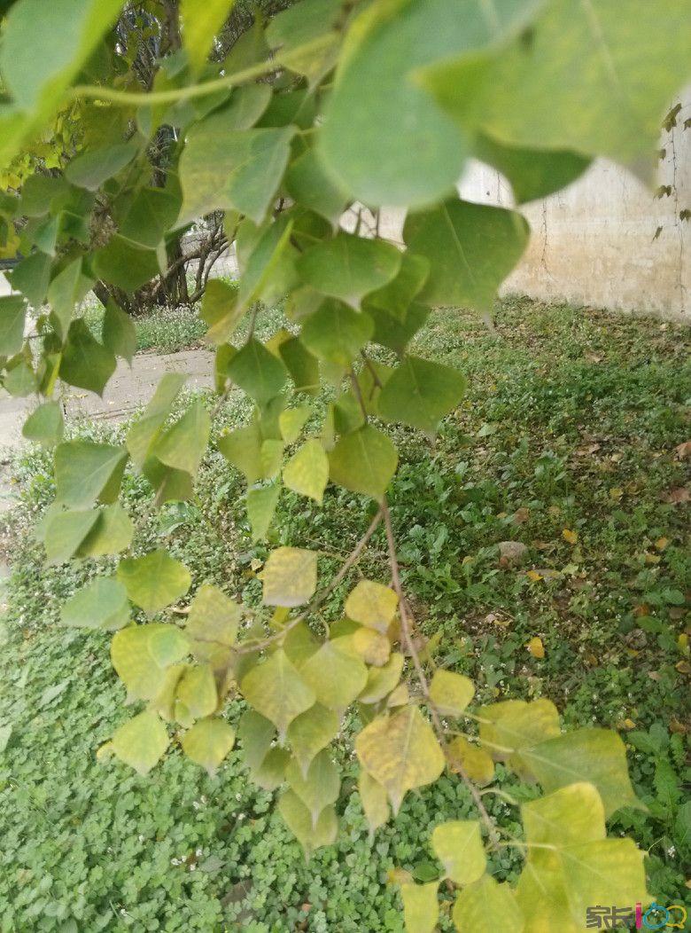 女人背影风景树叶