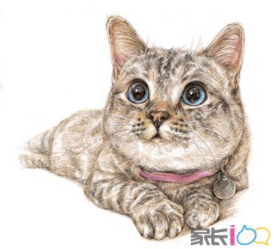 壁纸 动物 猫 猫咪 小猫 桌面 389_354