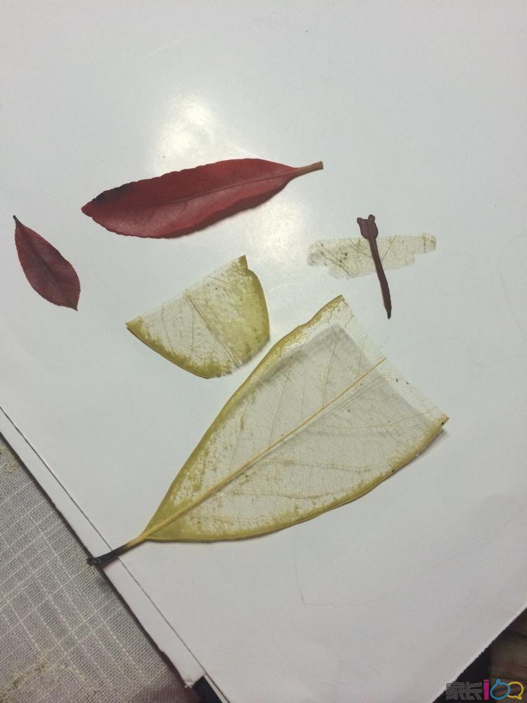 树叶贴画------幼儿园极速快三作业