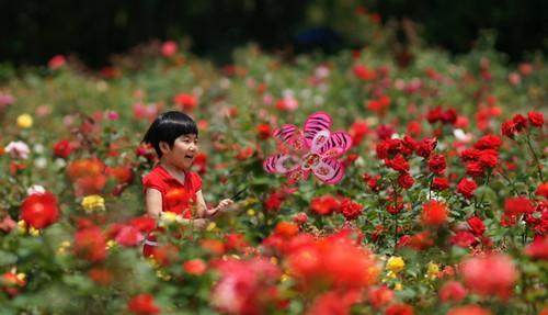 玫瑰园.jpg