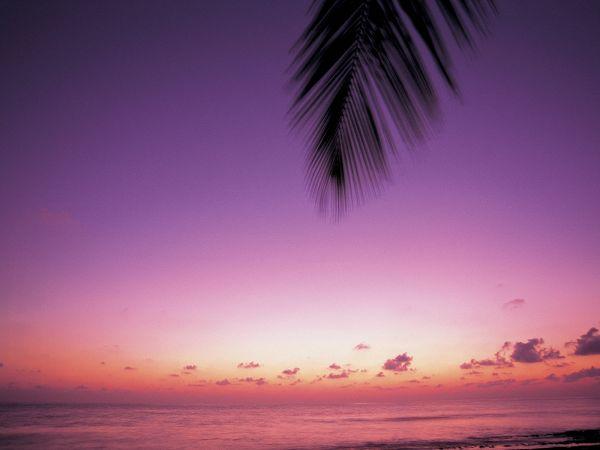 紫色聊天背景图片大全