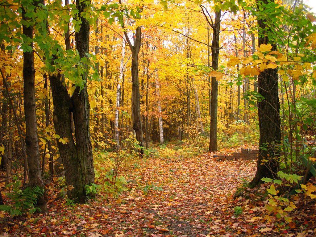 秋天风景简笔画彩色